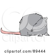 Grinning Gray Rat With A Long Pink Tail