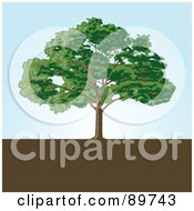 Royalty Free RF Clipart Illustration Of A Mature Tree On Brown Earth Against A Blue Sky