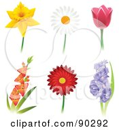 Royalty Free RF Clipart Illustration Of A Digital Collage Of Beautiful Daffodil Daisy Tulip Gladiola Gerbera Daisy And Hyacinth Flowers
