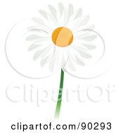 Beautiful White Daisy Flower