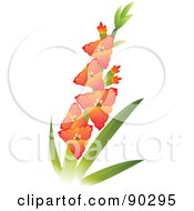 Beautiful Stem Of Gladiola Flowers