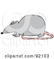 Royalty Free RF Clipart Illustration Of A Gray Rat With A Pink Tail In Profile