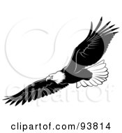Royalty Free RF Clipart Illustration Of A Black And White Bald Eagle In Flight 3 by dero #COLLC93814-0053
