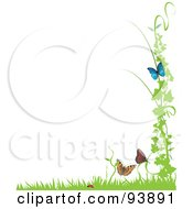 Ladybug And Butterflies With A Vine And Grass