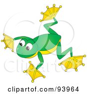 Cute Green And Yellow Tree Frog