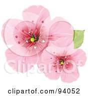 Royalty Free RF Clipart Illustration Of Two Pink Cherry Blossom Flowers With A Green Leaf