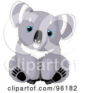 Cute Gray And White Sitting Baby Koala