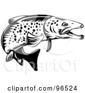 Black And White Spotted Trout Fish