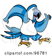 Blue Parrot Walking And Swinging His Arms
