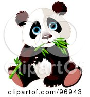 Royalty Free RF Clipart Illustration Of A Blue Eyed Baby Panda Sitting And Munching On Bamboo by Pushkin