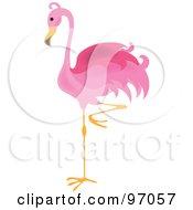Royalty Free RF Clipart Illustration Of A Pink Flamingo Bird Balanced On One Leg