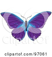 Blue And Purple Butterfly With Open Wings