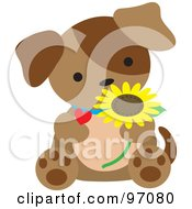 Brown Puppy Dog Sitting With A Daisy And Heart