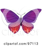 Pink And Purple Butterfly With Open Wings