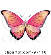 Pink And Orange Butterfly With Open Wings