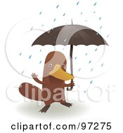 Platypus Standing Under An Umbrella In The Rain