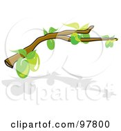 Royalty Free RF Clipart Illustration Of A Tree Branch With Green Olives And Leaves Over A Shadow