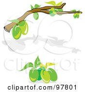 Royalty Free RF Clipart Illustration Of A Digital Collage Of An Olive Tree Branch And Shadow And A Cluster Of Green Olives by MacX