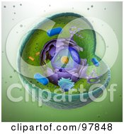 Royalty Free RF Clipart Illustration Of A Scientifically Correct 3d Animal Cell by Mopic