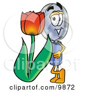 Magnifying Glass Mascot Cartoon Character With A Red Tulip Flower In The Spring