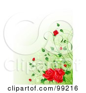 Background Of Red Roses And Buds Over Gradient Green