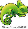 Poster, art print of Happy Green Chameleon Lizard With A Curled Tail Clipart Illustration Image