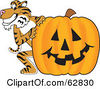 Royalty Free RF Clipart Illustration Of A Tiger Character School Mascot With A Halloween Pumpkin by Toons4Biz